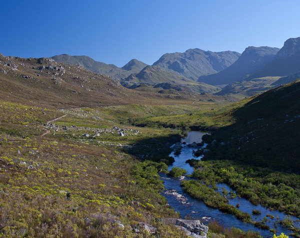 Kogelberg: the finest example of mountain fynbos