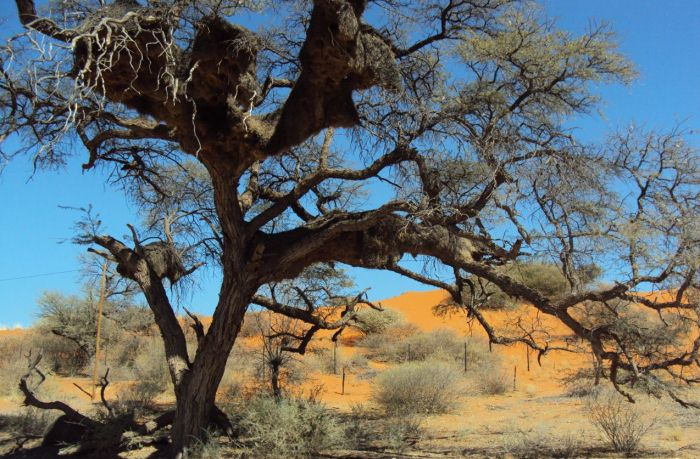 Why visit the Kgalagadi?