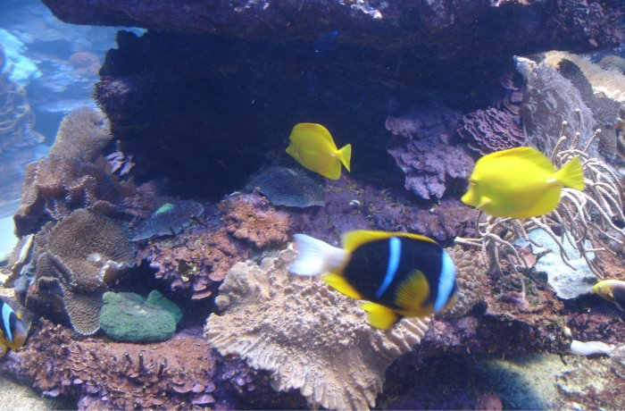 uShaka Marine World in Durban has developed out of a vision to create ...