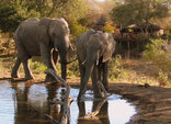 Limpopo Travel Guide