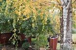 Patcham Place Guest House - Garden