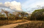 Shakati Private Game Reserve - Evening drive in the bush