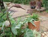 Granny Mouse House - Garden Creature
