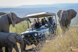 Thula Thula Private Game Reserve - Wild encounters