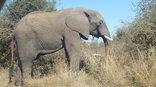 Woodridge Palms Boutique Hotel - Elephant