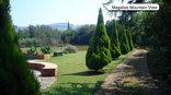 Reeds River Lodge - Garden view