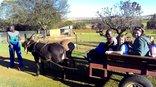 Thabametsi - Donkey cart ride