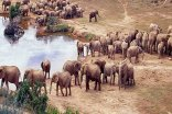 Gorah Elephant Camp - Waterhole - Addo Elephant National Park
