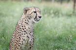 Emdoneni Lodge with Cheetah Project and Spa