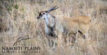 Nambiti Plains Private Game Lodge - Game Viewing