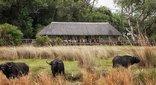 Chitabe Lediba Camp
