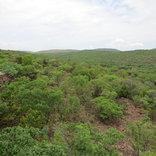 Mangwa African Safari - Beautiful Nature