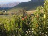 Lancewood TiPi Camp - Great Views