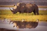 15 The Bridge Holiday Resort - Rhino
