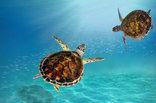 15 The Bridge Holiday Resort - Turtle