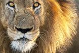 15 The Bridge Holiday Resort - Lion