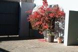 Aletheim Guest House - Leopards & Lillies Cottage