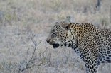 3 Day Private Safari Experience in Kruger National