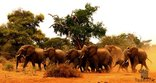 Tsakane Safari Experience