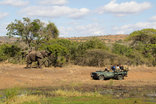 Bayala Private Safari Lodge and Camp - Game drives with elephant