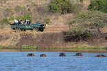 Bayala Private Safari Lodge and Camp - Game drives with hippo