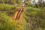 Palala Boutique Game Lodge and Spa - Wild life at Palala Boutique Game Lodge