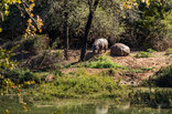 Palala Boutique Game Lodge and Spa - Hippos spotted at Palala Boutique Game Lodge