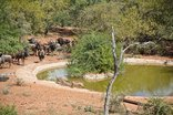 Long Crested Eagle Country Lodge ta Ehlathini Game - Watering Hole