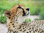 Hoedspruit Endangered Species Centre and Accommodation