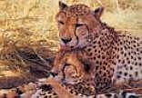 Satara Restcamp - Kruger Park