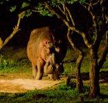 Makakatana Bay Lodge - Hippo