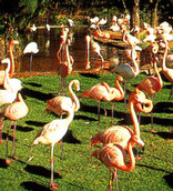 National Zoological Gardens