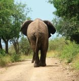 Gooderson Bushlands Game Lodge - Go Interact With Elephants