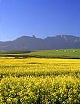 Towns in the Overberg