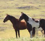 Tenahead Mountain Lodge - Horses
