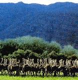 Cango Ostrich Farm - Oudtshoorn