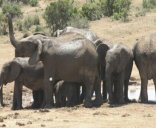 Elephants Footprint Lodge - Addo wild life