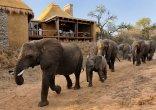 Zindoga Villa - Zindoga Villa Elephants