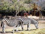 a Zaganaga Kruger Lodge