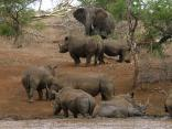 Rhino River Lodge - The meeting of the Giants