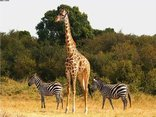 Kruger Park Wilderness Trails