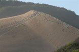 Abalone Place - Maitlanf Dunes