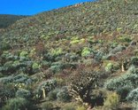 The Great Karoo - Succulent Karoo