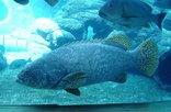 Durban -  uShaka Marine World