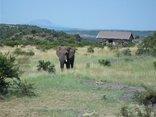 The Springbok Lodge - BFE