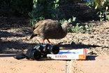 Duinepos Chalets - Duinepos Chalet Birding