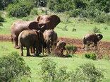 Kudu Ridge Game Ranch - Addo elephant