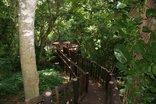 Ndiza Lodge & Cabanas - Deck in wetlands