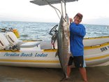 Paradise Beach Lodge - Deap Sea Fishing - 36kg Couta