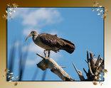 Fly De Aar Lodge - Birds
